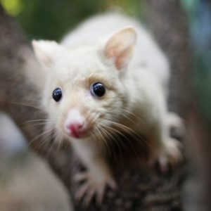 possum-search-update
